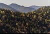 Yedigöller 3 (listera_ovata) Tags: yedigöller millipark nature naturephotography anatolia anadolu turkey turkiye forest orman autumn fall güz olympusomdem5 olympus60mmf28macro