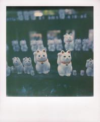 (Akira F.) Tags: polaroid slr680 slr680se color instant impossibleproject 600 color600 filmphotography film