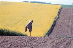 Agent de la circulation (RarOiseau) Tags: campagne nord romeries diapositivenumérisée 1986 paysage