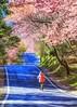 Cherry blossoms~ Wuling-farm ~武陵農場櫻花 (Estrella Chuang 心星) Tags: 花 櫻花 心星 武陵農場 波浪車道 風景 flowers cherryblossoms estrella