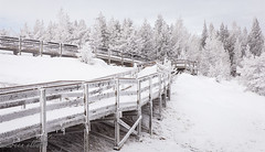 Boardwalk in Frost #HFF (maureen.elliott) Tags: boardwalk hff happyfencefriday geothermalareas yellowstonenationalpark wyoming winter frost landscape hiking nature trail nocolour monochrome