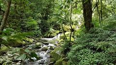 Caminho do Itupava (clodo.lima) Tags: mata woods forest river caminhodoitupava itupavaspath