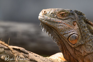 Wildlife at Madras Crocodile Bank, India