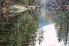 Yosemite Valley in Winter (punahou77) Tags: yosemite yosemitenationalpark yosemitevalley reflection river roadtrip trees water wilderness winter nature nationalpark nikond500 nikon mercedriver mirror glass