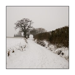 21/100x (neals pics) Tags: snow winter weather season seasonal path farmland countryside rural tree hedge direction my100x–squareformat 100xthe2018edition 100x2018 image21100