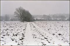 my walk (steve-jack) Tags: nikon f5 50mm fujicolour c200 film 135 snow winter buntingford hertfordshire tetenal c41 kit