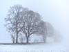 Winter fog (Ulrich Neitzel) Tags: baum feld field fog highkey mzuiko1240mm nebel olympusem1 schnee snow tree weiss white winter