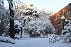 "Morning After Stormy Snow (seiji2012) Tags: 一橋大学 雪 国立市 ""hitotsubashi university kunitachi"