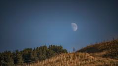 Moon rise... (Lee~Harris) Tags: landscape moon daytime serene light trees sky outdoor moorland lancashire rivington g80 contrast tranquil