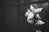 2013_Kanazawa-07 (peaceblaster9) Tags: winter kanazawa japan travel monochrome blackandwhite bw bnw 初心者 北陸 金沢 冬 モノクローム モノクロ 白黒