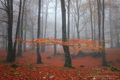 Gorria (Obikani) Tags: urbasa nafarroa navarre forest autumn leaves color red trees beeches landscape nature canonikos