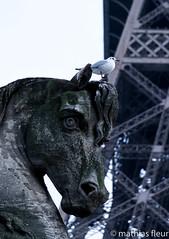 Tour Eiffel-Eiffel Tower (Mathias25) Tags: paris iledefrance france photographie photography photo architecture parisbynight picoftheday toureiffel eiffeltower pauselongue longexposure nightphoto nightphotography