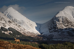 Monarch of the Glen (calderdalefoto) Tags: scotland scottish landscape winter glen highlands stag deer snow mountains