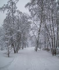 February snow (cameramann86) Tags: canon canon1785 canon1785f456 canon7d moscow russia white landscape nature snow snowfall winter