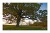 Auprès de mon arbre (Sugarth Photo) Tags: orangehour automne tree fontainesensologne france loircher 41 d50
