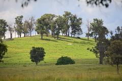 LOX_3589 (LoxPix2) Tags: australia nsw tenterfield bluffrock scenery landscape loxpix lookout mountains