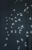 fly away (pbo31) Tags: bayarea california nikon d810 color night dark black january 2018 winter city urban boury pbo31 sanfrancisco soma hotel 4th art birds
