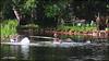 IMG_0911_Bath Time (Ajax_pt/Zecaetano) Tags: lago lake patos