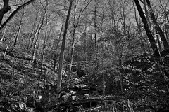Colors of Leaves (and Those Fallen) in Ozark National Forest (Black & White)
