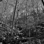 Colors of Leaves (and Those Fallen) in Ozark National Forest (Black & White) thumbnail