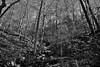 Colors of Leaves (and Those Fallen) in Ozark National Forest (Black & White) (thor_mark ) Tags: autumncolors blackwhite blueskies bostonmountains boulders capturenx2edited carpetoffallenleaves carpetofleaves colorefexpro day2 evergreens fallenleavesacrosslandscape hillsideofrocksandboulders hillsideoftrees hillsides landscape largerocks lookingne mossonrocks mountains mountainsindistance mountainsoffindistance nature nikond800e northamericaplains outside ozarkhighlands ozarknationalforest ozarkplateau ozarkstfrancisnationalforests portfolio project365 rollinghillsides silverefexpro2 sunny trees triptoozarknationalforestandmountains walktohighbanktwinfalls arkansas unitedstates
