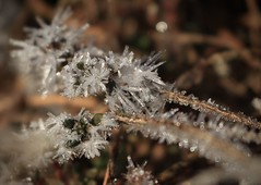 cristaux (bulbocode909) Tags: valais suisse cristaux givre gel plantes nature montagnes hiver