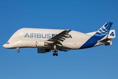Airbus Industrie - Airbus A300-605ST F-GSTD @ Toulouse Blagnac (Shaun Grist) Tags: airbus airbusindustrie beluga fgstd 4 a300 shaungrist tls toulouse airport aircraft aviation aeroplanes airline avgeek cargo