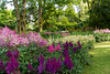 Astilbe flower bed (Keith in Exeter) Tags: astilbe flower garden tree grass outdoor lanhydrock nationaltrust cornwall england