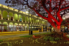Illuminated Zocalo (Chemose) Tags: mexico mexique yucatán campeche arcades zocalo place square arbre tree hdr canon eos 7d mars march nuit night