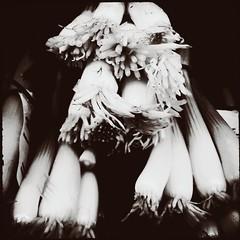 Produc(ed)-12256 (Poetic Medium) Tags: square stilllife produce rni kitcamghostbird ipod food