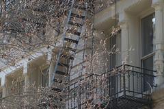 A SoHo Medley (J MERMEL) Tags: cityscapesurbanviews genres geography nyc stilllifeoutdoor treesflowers views architecture