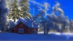 A Sunday Speech; Taking care of loved ones (evakongshavn) Tags: blahblahscape blahblah red redhouse redcottage white new light snow winter winterwonderland winterwald winterlandscape natur nature tiltshift miniature sunlight sunrays beautifulearth ethereal homesweethome homeiswhereyourheartis unconditionallove love