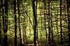 2013-09_D70_2018_20171206 (Réal Filion) Tags: québec canada arbre forêt environnement végétal nature texture tree vegetable forest environment quebec