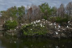 Birds of a Feather (Eddie C3) Tags: birds florida greategret anhinga woodstork