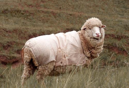 Seuls quelques moutons rompent ma solitude
