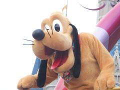Pluto (DisneyGirl13!) Tags: pluto festival fantasy parade magic kingdom mk wdw disney