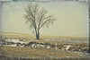One Tree (Dave Linscheid) Tags: landscape tree snow winter texture textured farmland rural country agriculture farm topaztextureeffects