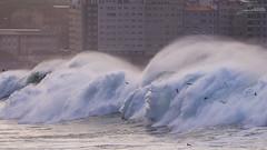 Temporal en Riazor 17/01/2018 (Sachada2010) Tags: sachada sachada2010 javier martin olympus epl6 40150mm mzuiko lumix 14mm f25 temporal storm olas waves playa beach riazor coruña la galicia españa spain mar sea borrasca evi