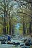 DSC_0041 (MarceRodz) Tags: water rocks tree nature fisherman landscape river raíces rio zonacitricola ríoramos allendenl agua peces río pescador