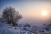 2018-01-23 SPb, Finland gulf, frost 124 (Mandir Prem) Tags: outdoor places stpetersburg brige city colour finlandgulf frost frozen horizon ice landscape nature postcard russia saintpetersburg snow sunset travel tree winter