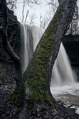20180224DSC09479 (Todd Plunkett) Tags: plant water longexposure parks tree waterfall northamerica charlestonfallspreserve betheltownship ohio unitedstates usa