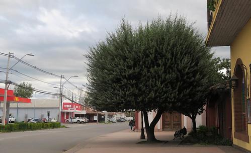 Santa Cruz, chascon