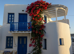 Chora, House and flowers (JLS@Photos) Tags: folegandros grèce maisontypique cyclades greece typicalhouse
