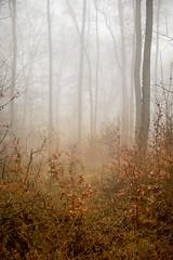 Foggy forest (janeway1973) Tags: fog foggy forest nebel neblig wald trees bäume atmosphäre atmosphere mystical mystisch soft fairy tale märchen