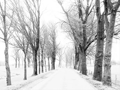 Wonderland (Jenne Barneveld) Tags: wonderland magical magicalwonderland winter wintermorning wintertime morningwalk whereilive trees tree blackandwhite blackwhite olympusem10 olympus