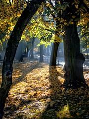 Autumn in the city park (kud4ipad) Tags: 2017 krakow poland park leaf foliage yellow light shadow fog tree