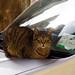 Cats sleep on cars
