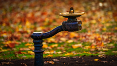Drinking Water Fountain (Hameed S) Tags: nyc newyorkcity newyork water woods autumn leaves landscape fall remote nature imagination season rumi