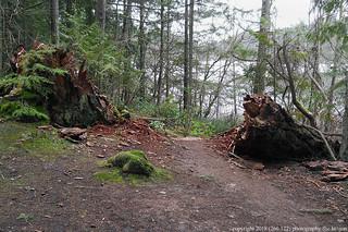 2018-02-11 Heart Lake Trail 210 (03) (1024x680)