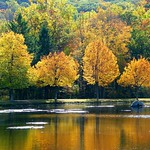 Golden Fall Reflection thumbnail